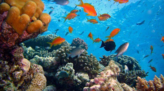 海での温暖化現象:グレートバリアリーフの危機的状況 オーストラリア政府の対策はホントに大丈夫?