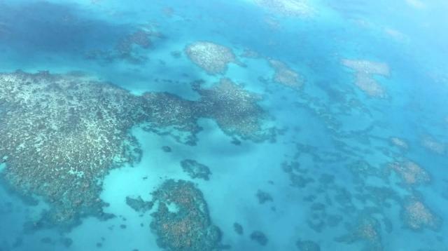 海での温暖化現象:グレートバリアリーフの危機を救え