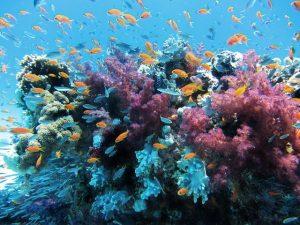 coral-underwater