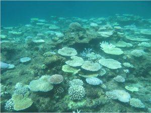 白化サンゴ(環境省)