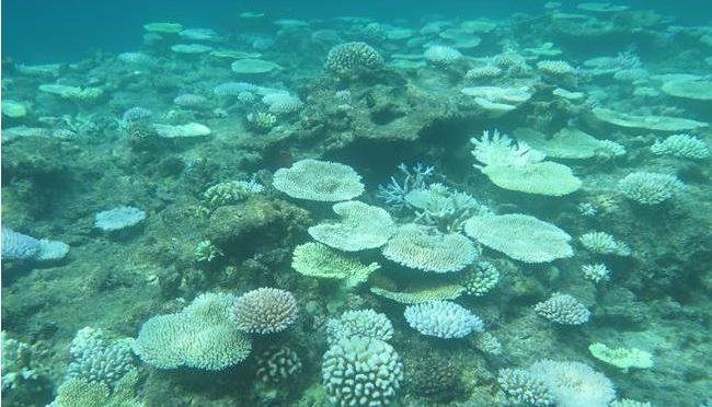 海での温暖化現象:海水温上昇で沖縄サンゴが白化!海の生態系の異変の背景に温暖化?!