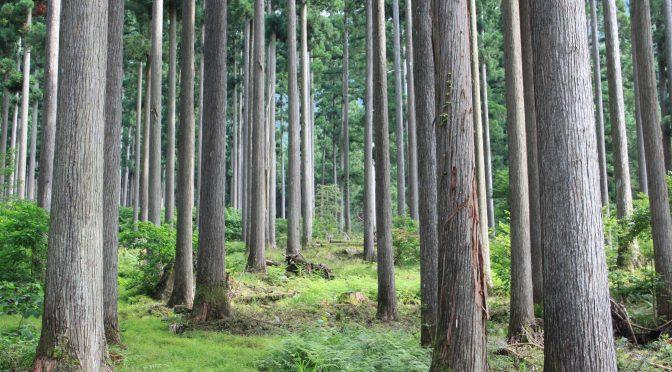 岡山県西粟倉村の『上質な田舎』を目指した、低炭素モデル社会の創造
