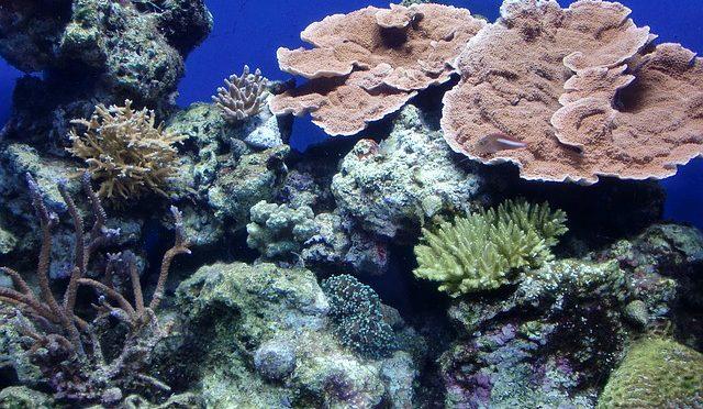 海での温暖化現象:サンゴの白化の北上 サンゴ礁は回復できるか