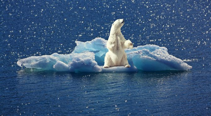NPOが年次報告書をつくる意味~気候ネットワーク年次報告書2016の5つの工夫~
