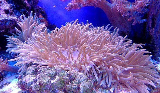 海での温暖化現象:サンゴに忍び寄るマイクロプラスチック汚染